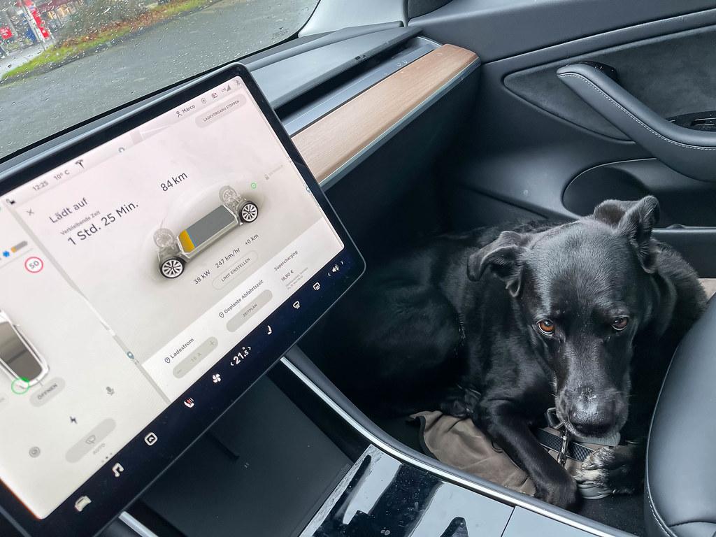 Schwarzer Hund sitzt auf dem Boden auf der Beifahrerseite eines Elektroautos