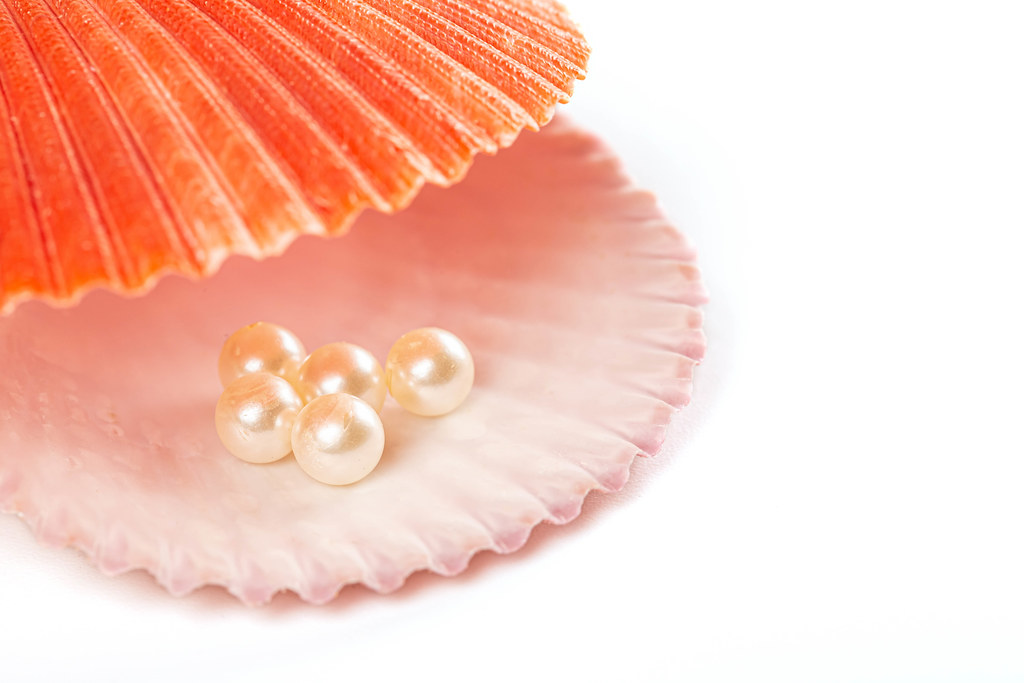 Seashell with pearl, close up white background