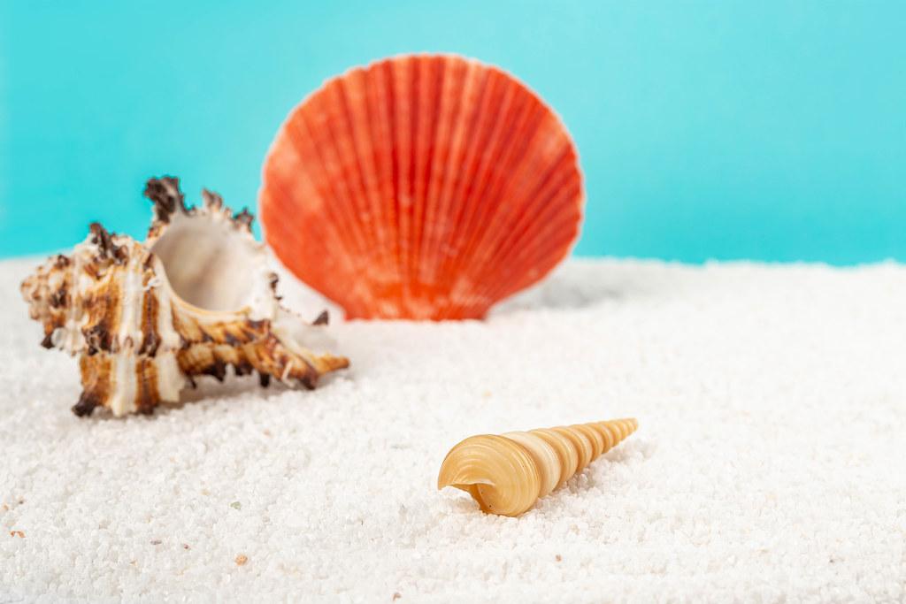 Seashells on the beach, summer background