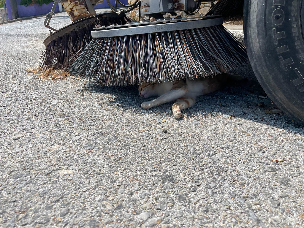 Siesta on a hot day: cat taking a nap in the shade under the brush of a road-cleaning machine on Alonissos