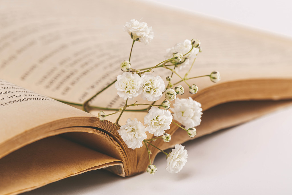 Sprig with white flowers on the pages of an old book
