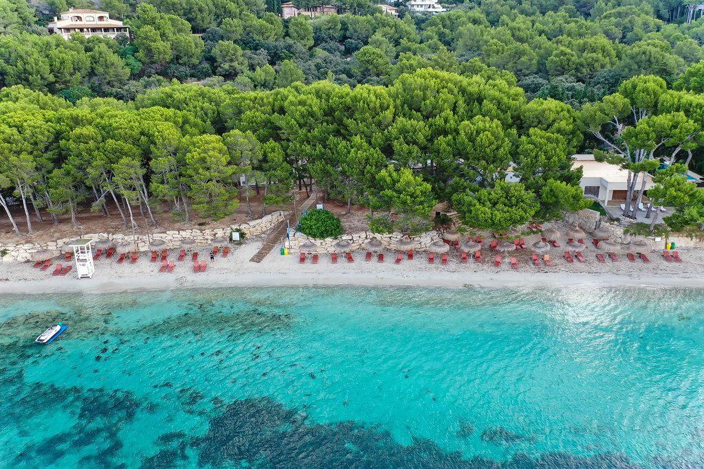 Strand mit Kiefern: Drohnenaufnahme der Playa de Formentor, Cala Pi de la Posada auf Mallorca