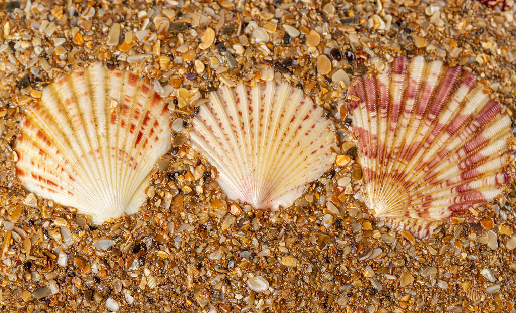 Summer background with seashells, top view