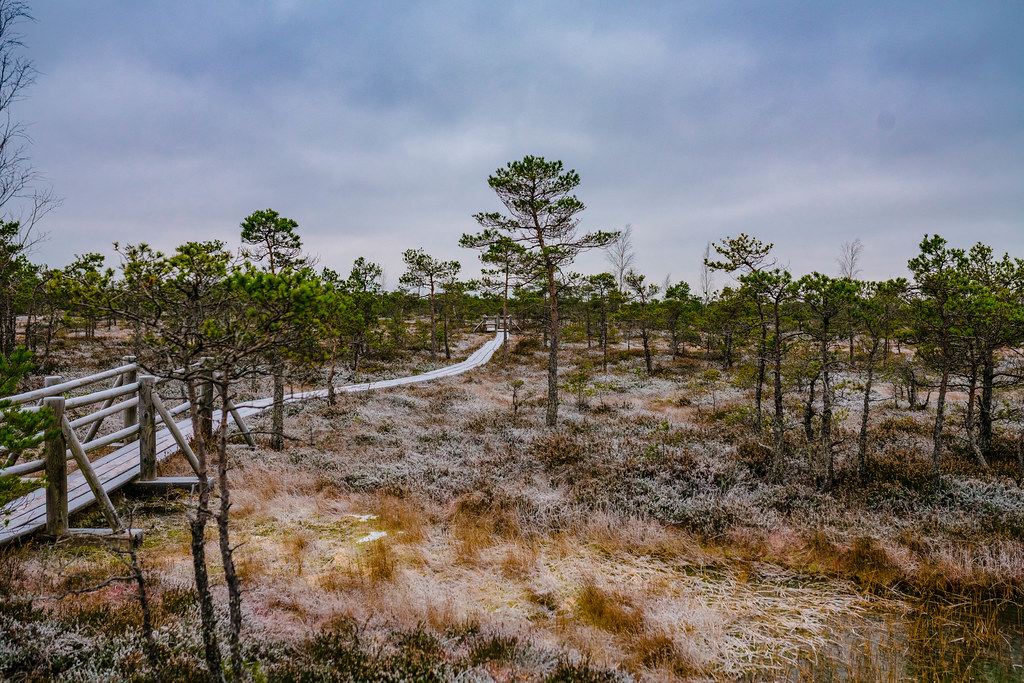 Swamp Scenery With Frozen Ground National Park