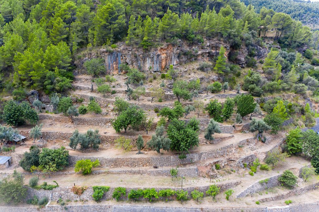 Terraced hillside with orange, olive and pine trees near the artist village of Deià, Majorca. Drone photo