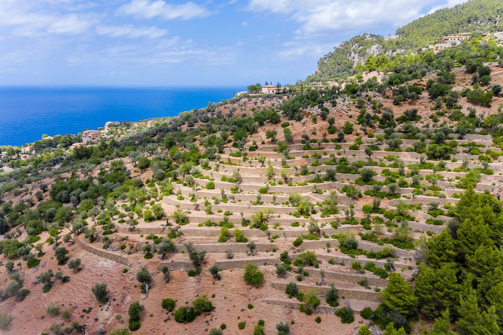 Terrassierter Hügel mit Orangen- und Olivenbäumen in der Nähe von Deià auf Mallorca Luftbild