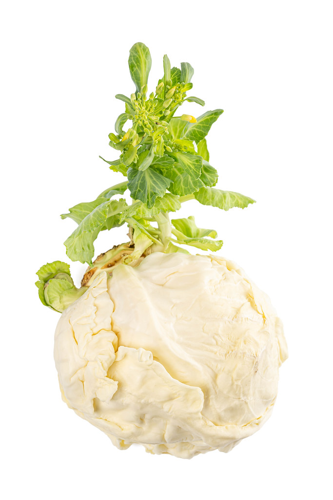 The cabbage head sprouts in the spring