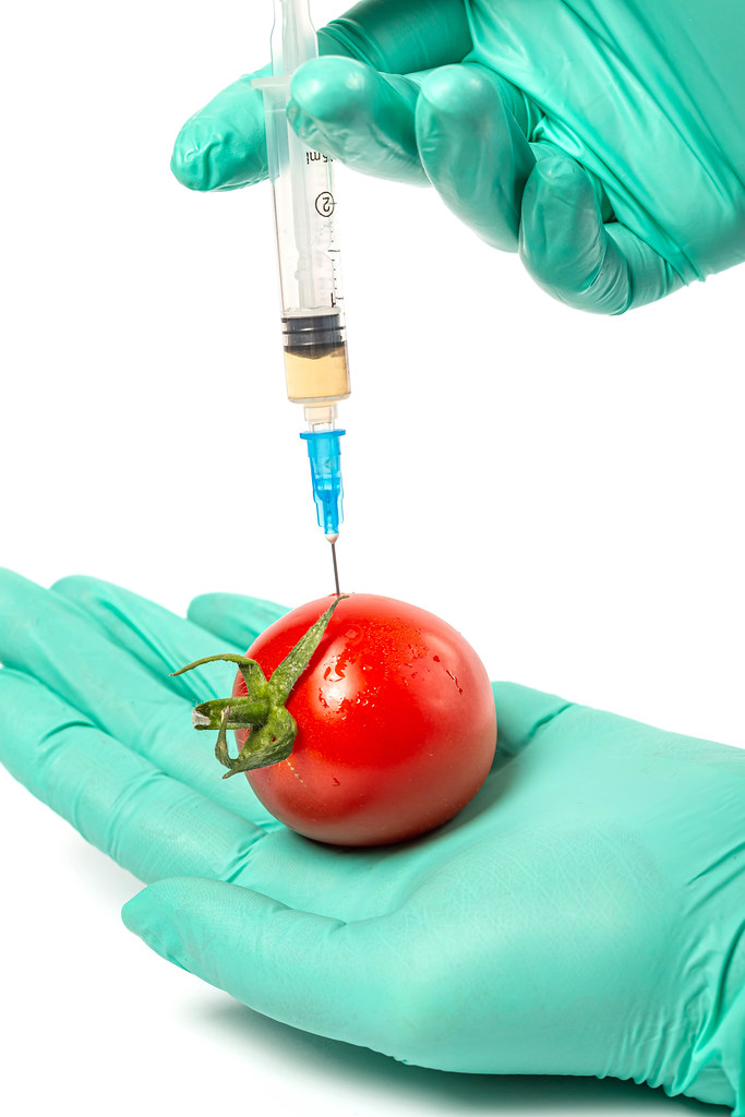 The process of injection in tomato, close up