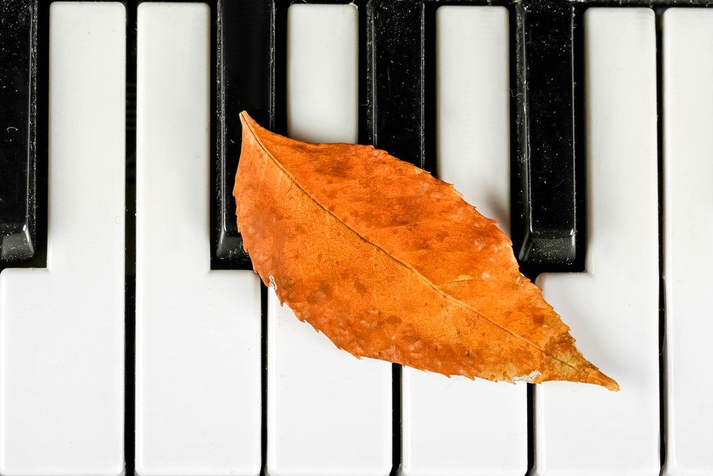 Top view, dry yellow autumn leaf on the piano keys