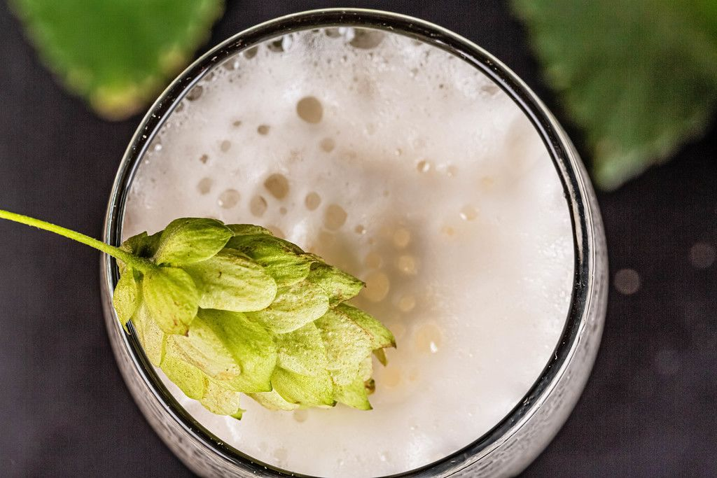 Top view, hop cone on beer foam in a glass, close-up