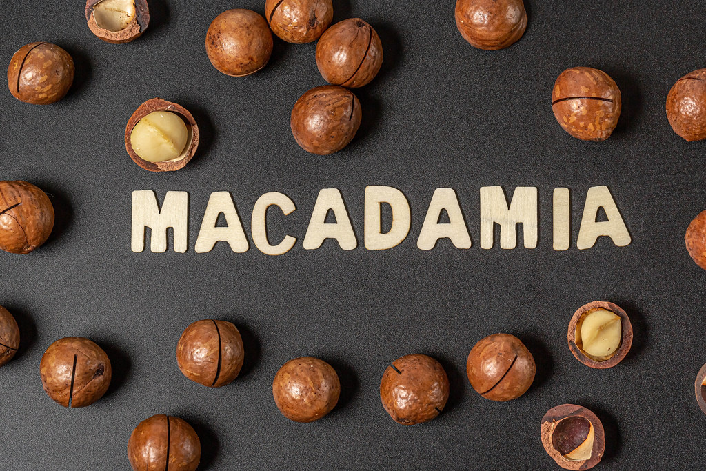 Top view, inscription macadamia from wooden letters and ripe nuts on black background