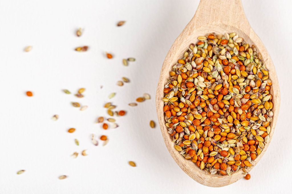Top view, millet seed on wooden spoon