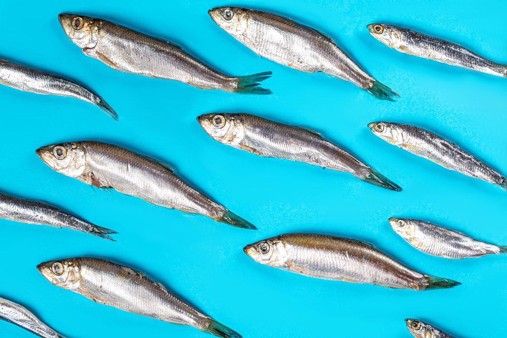 Top view, small fish on a blue background