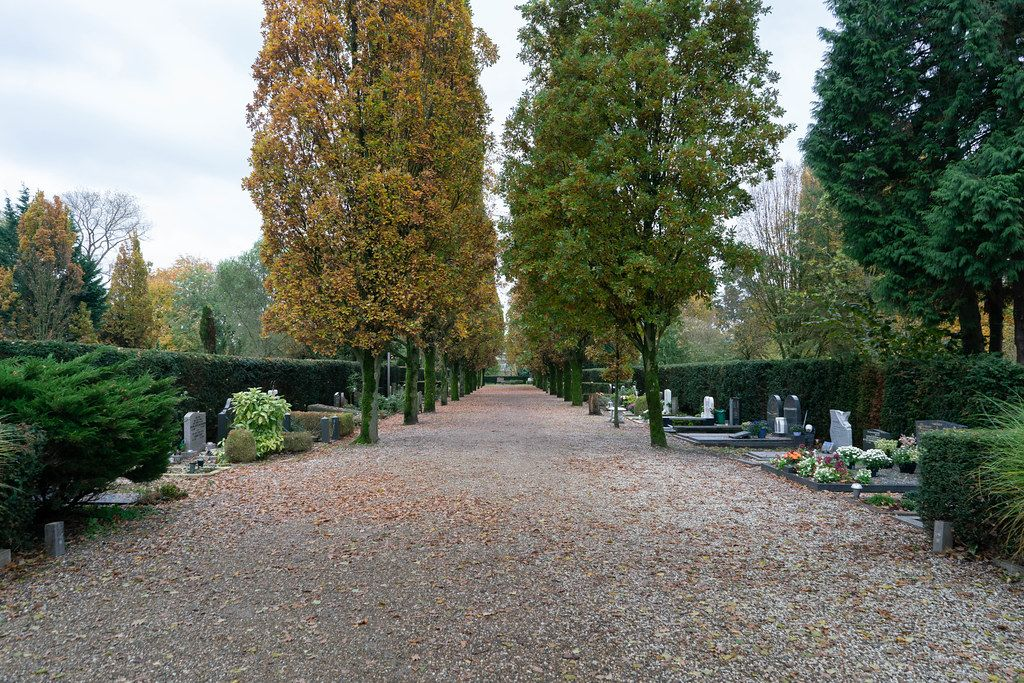 Tree alley with tall trees and graves at Dutch cemetery De Nieuwe Noorde