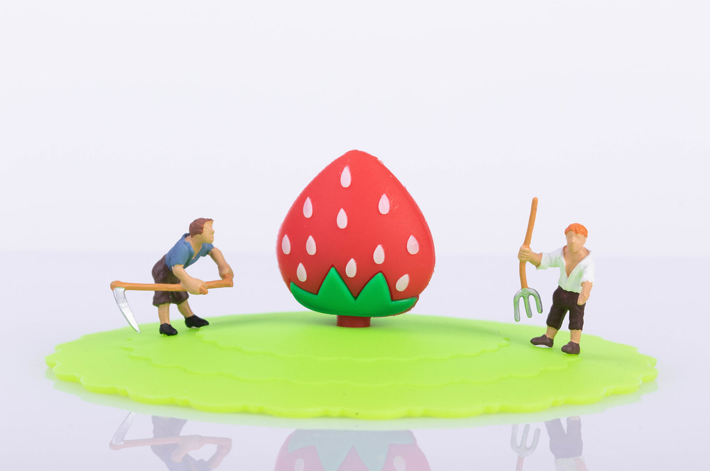 Two farmers with big strawberry