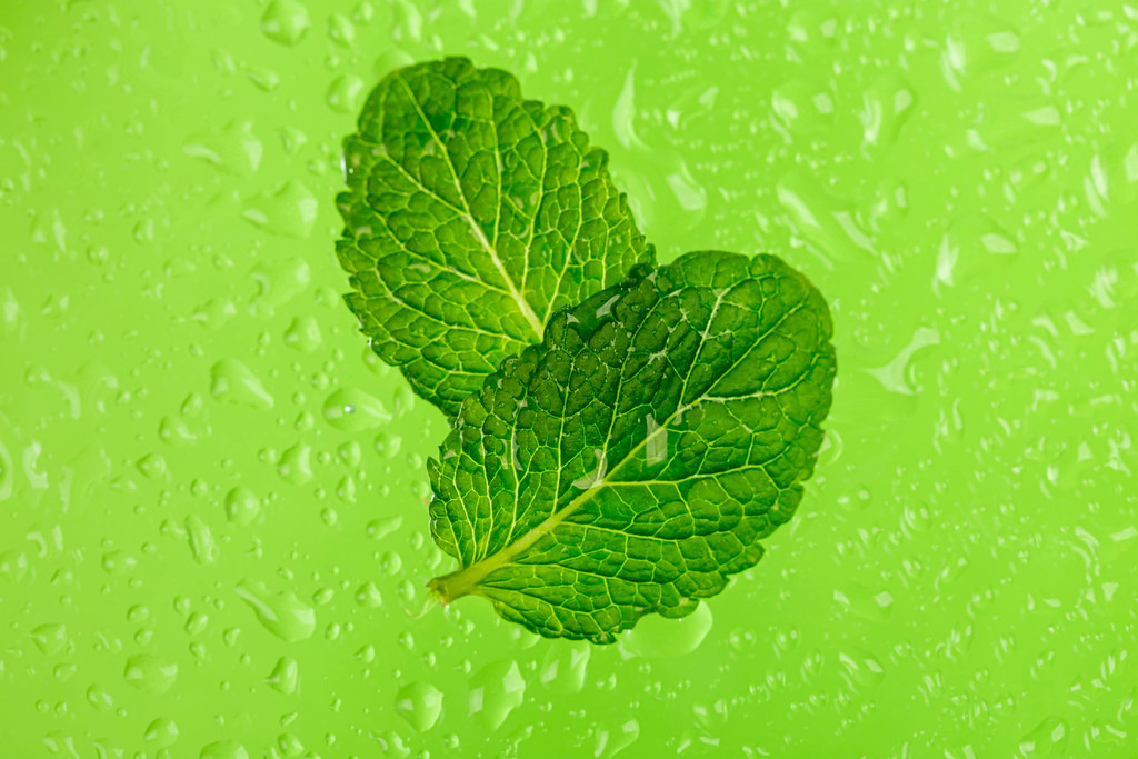 Two fresh mint leaves on a green background with water drops