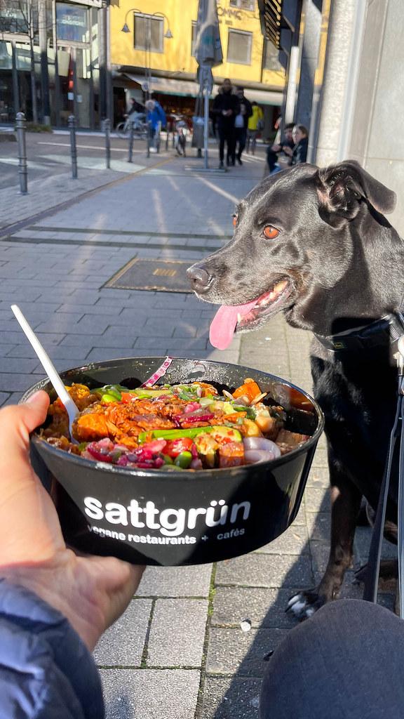 Unterwegs mit schwarzem Hund und einer Schüssel veganes Essen to go von Sattgrün in Köln