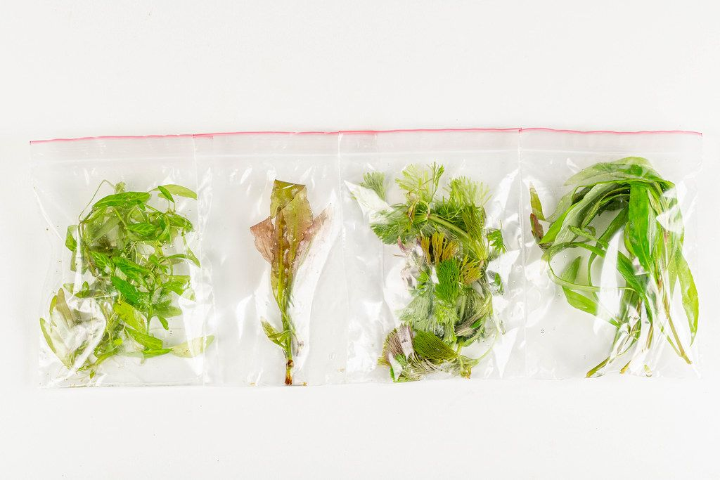 Varieties of aquarium plants in bags, top view