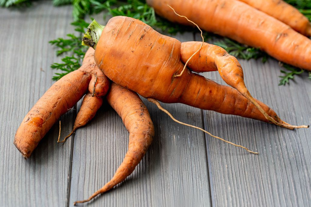 Vegetable background with fresh carrot roots