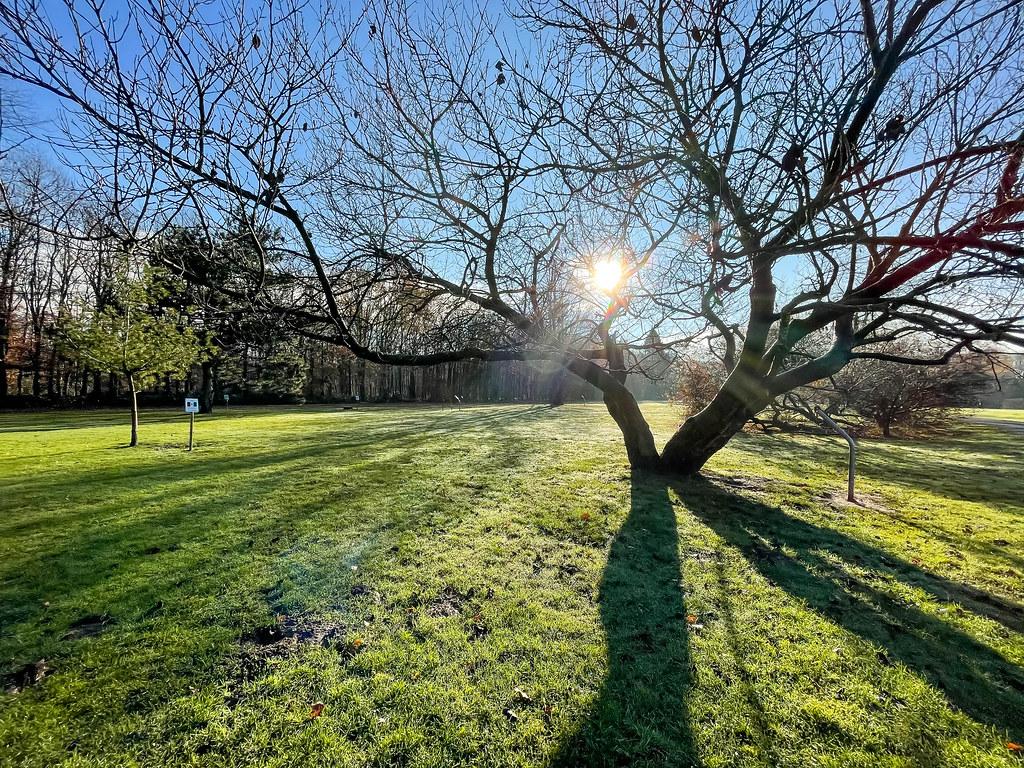 Wintersonne hinter einem Baum mit kahlen Ästen. Lange Schatten auf der grünen Wiese
