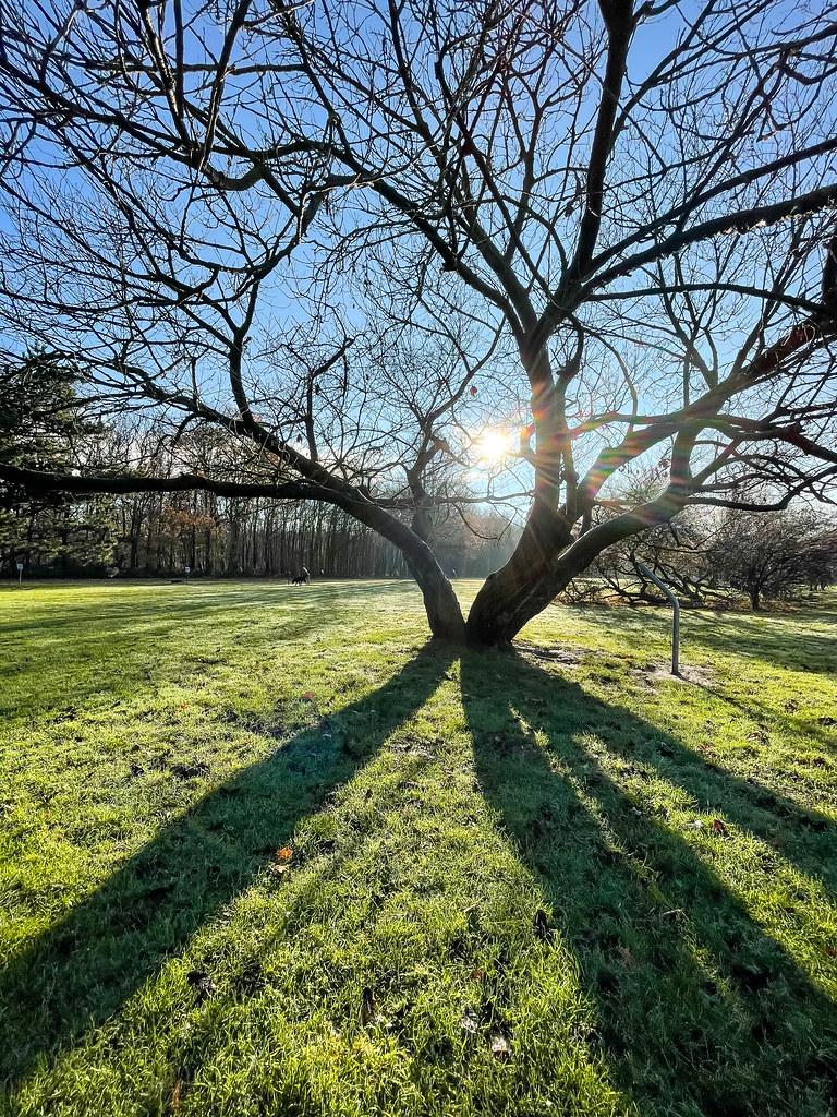 Wintersonne und lange Schatten am Friedenwald in Köln: ein Spaziergang im Freien im Dezember