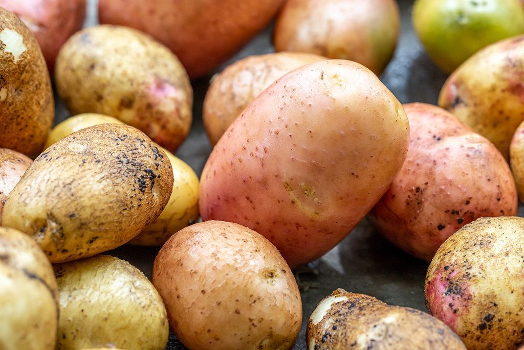 Young fresh potato background
