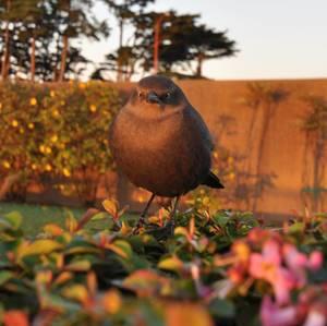"""""""Angry Bird"""""""