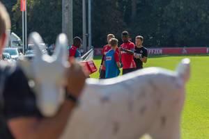 1. FC Köln Spieler und eine Hennes VIII Figur im unscharfen Vordergrund