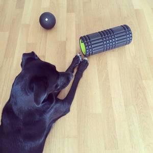 17 days until #BerlinMarathon. How do you stay fit and healthy? #running #sports #marathon #berlin #koelnmarathon #labrador #laboftheday #instapic #picoftheday #triggerpoint #blackroll #fitness #pets #puppy