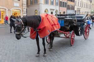 A black horse with a coach for carriage rides through Rome