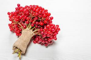 A bunch of twigs with berries of fresh ripe viburnum on a white wooden background (Flip 2019)