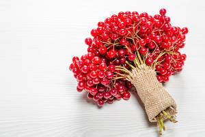 A bunch of twigs with berries of fresh ripe viburnum on a white wooden background