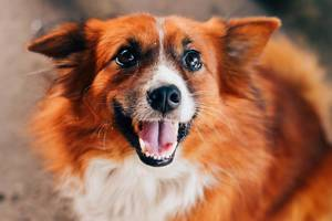 A fluffy dog with a smile (Flip 2019)