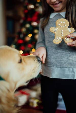 A girl with a Christmas cookie and a dog  Flip 2019