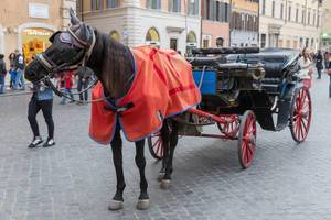 A horse pulling a carriage in Rome
