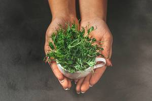 A woman holds a Cup with fresh pea sprouts on a dark background (Flip 2019)