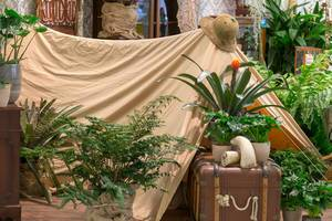 Abenteuer-Kulisse am Dalva-Messestand mit Zelt, Hut, Truhe und verschiedenen Pflanzen