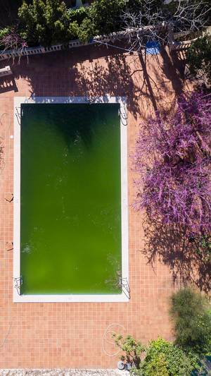 Aerial photo of an algae infested swimming pool