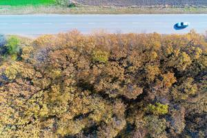 Aerial view of autumn forest and straight road (Flip 2019)
