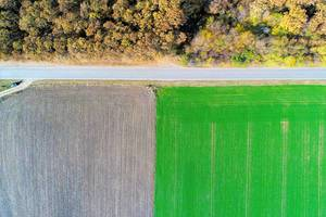 Aerial view of road between field and forest (Flip 2019)