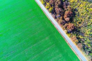 Aerial view over green field and empty road (Flip 2019)