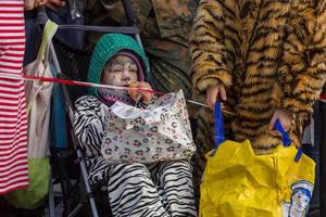 Als Tiger verkleideter Junge im Kinderwagen - Kölner Karneval 2018