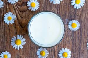 Ansicht von oben auf ein gefülltes Glas Milch zwischen Gänseblümchen, auf einem rustikalen Holztisch