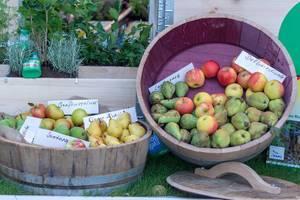 Äpfel und Birnen verschiedener Sorten in abgesägten Fässern