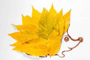 Applique hedgehog made of autumn yellow leaves (Flip 2019)