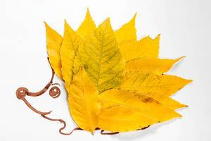 Applique hedgehog made of autumn yellow leaves