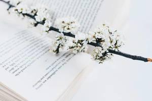 Aufgeschlagenes Buch und Frühlingsblumen