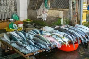 Auslage von frischem, ganzem Fisch auf Eis an einem einheimischen Markt in der vietnamesischen Küstenstadt Vung Tau, im Hintergrund eine Waage und Plastiktüten