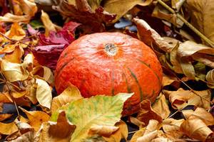 Autumn background with colorful leaves and ripe pumpkin