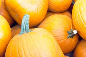 Autumn Color Pumpkins im Whole Foods Market